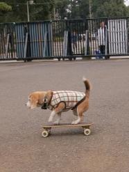 SkateDog