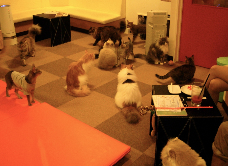 CatCafe2