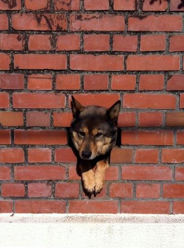 DogTrophy2