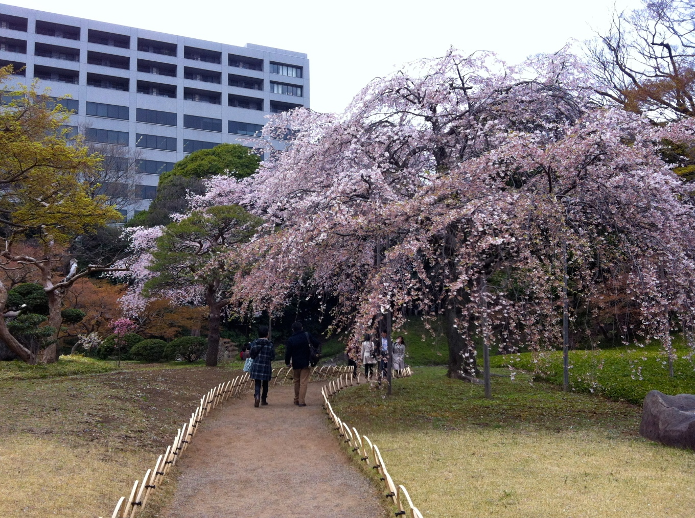 Full bloom at Koraku-en garden