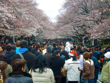 Ueno Park during cherry blossom season is packed with partiers from dawn to dusk.