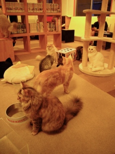 Some customers like to relax among the cats, who ignore them as if they were at home.