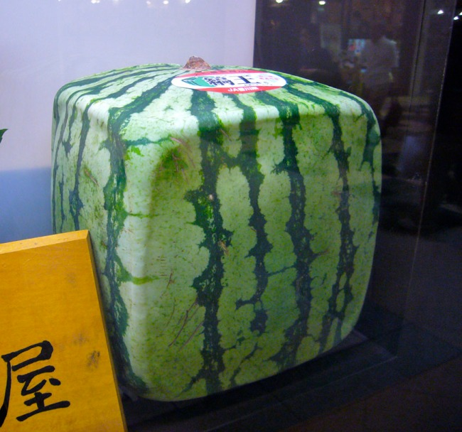 SquareWatermelon