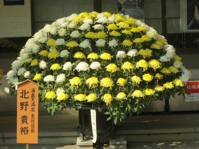 ChrysanthemumBall