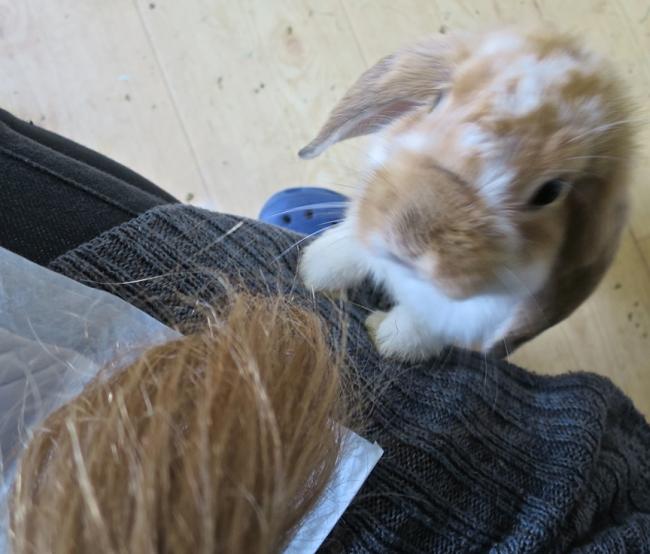 BunnyHair