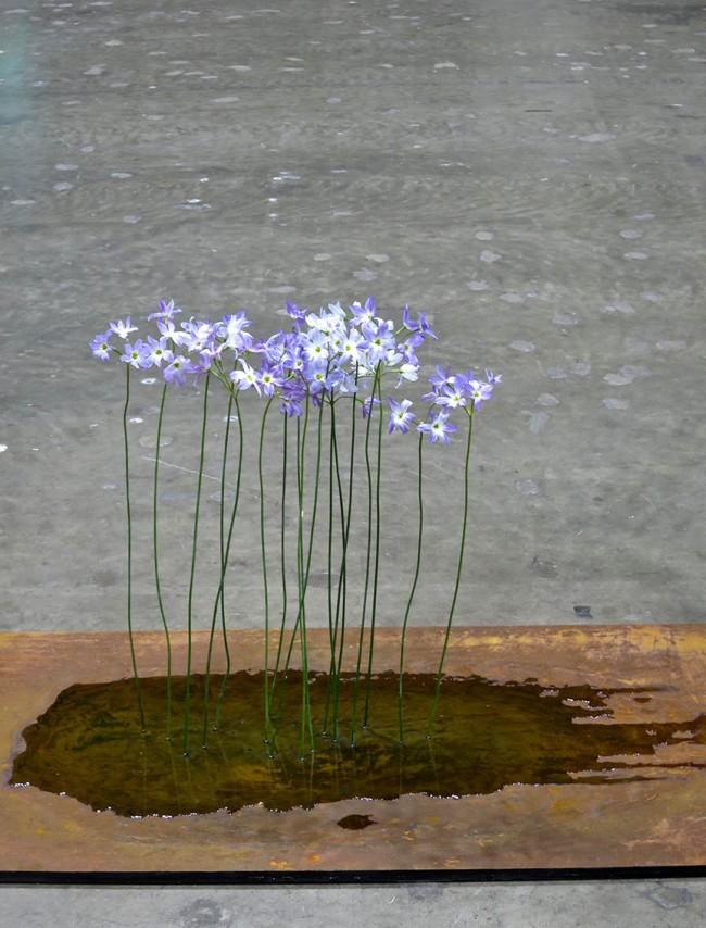 FlowerDream1