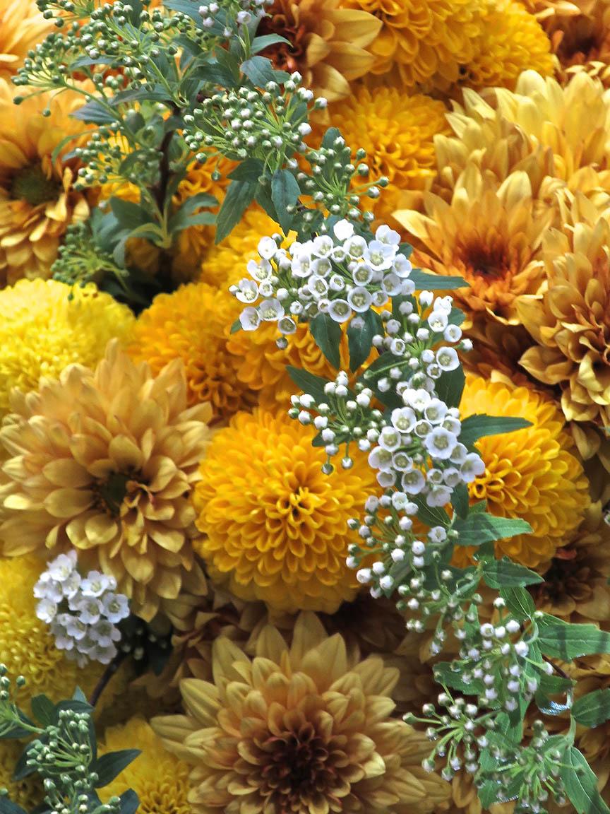 FlowerDream4