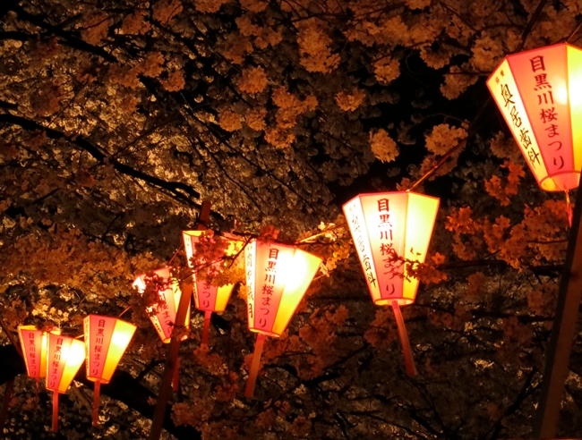Lanterns are strung in the trees all along the Meguro River.