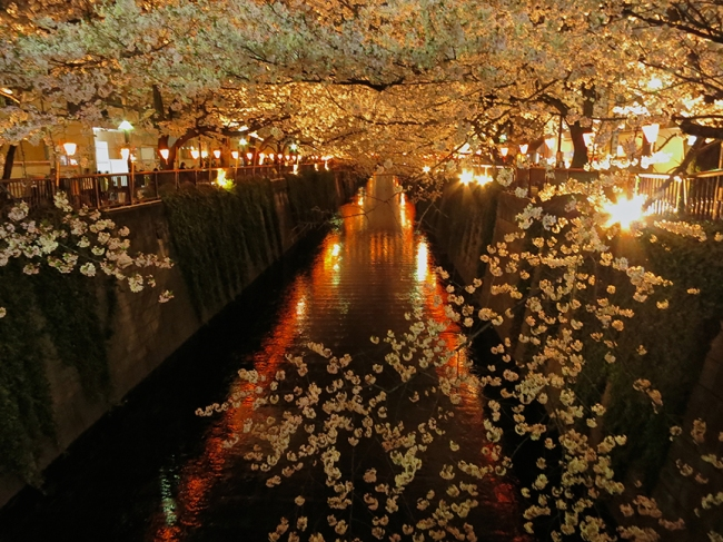 You can see why the Meguro River is no longer an undiscovered jewel of cherry blossom season...