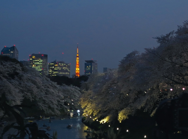 You can see Tokyo Tower from a spot at the Kudanshita end of the moat, if you can crane your neck past the giant scrum of photographers.