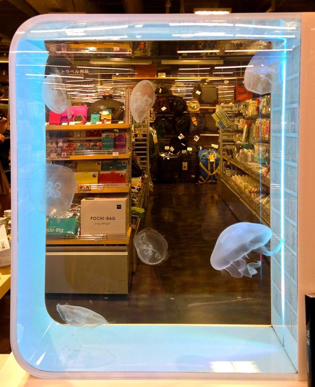 JellyfishBlue