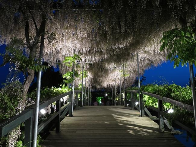 White ones, over a bridge at twilight