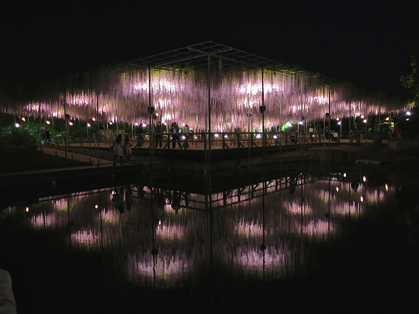 Here's the entire plant at night, reflected in a nearby pond!