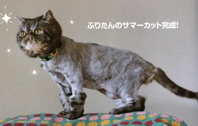 ShavedCat1