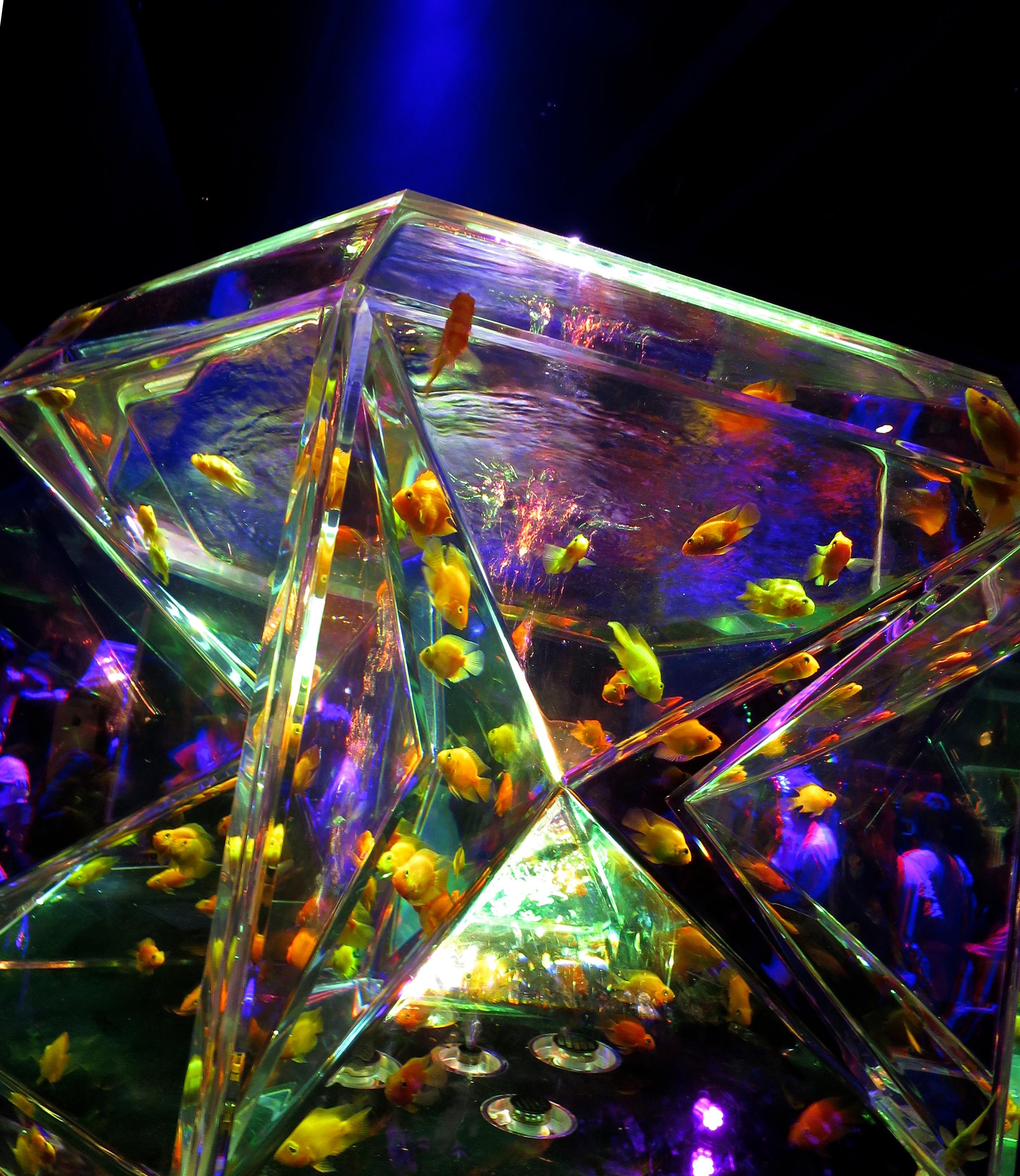 Cool Aquariums Art Aquarium Jonelle Patricks Only In Japan