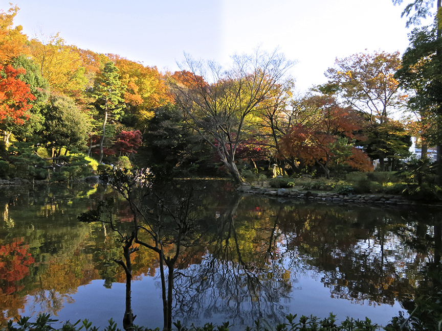 Trees of all colors reflect in the serene pond in mid to late-November.
