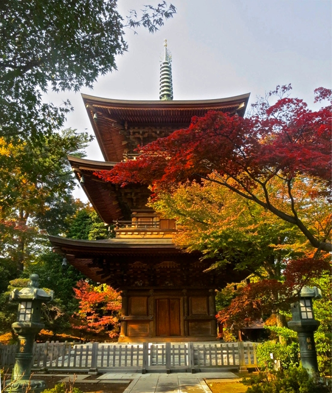 Gotokuji's wooden pagoda is the perfect backdrop for splendid red and gold maple leaves in mid-November. You'll find them here earlier than in central Tokyo.