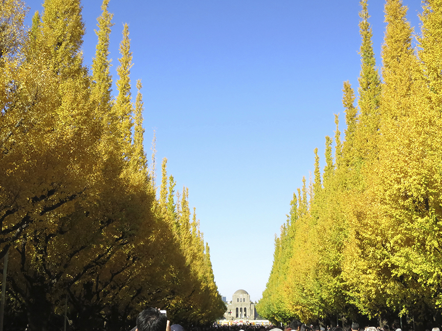 By late November, this famous boulevard is attracting thousands and thousands of camera-happy gawkers every day, but you can still enjoy the trees despite the crowds.