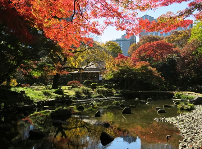 The Japanese maples at Koraku-en Garden are like jewels in a setting of green. They're at their peak in late November.