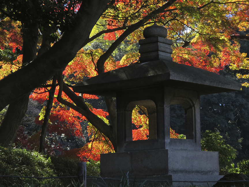 As you wander through the string of lovely gardens that make up Koraku-en, new blazes of color pop up to delight on every side.
