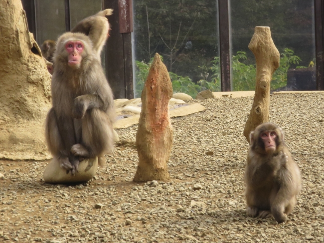 Bonus attraction: there's a monkey park at the top of the mountain.