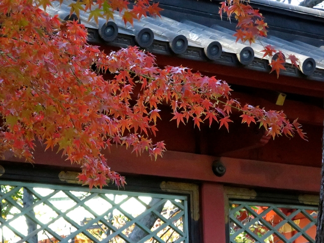 This is my favorite shrine in Tokyo, and autumn is one of the best times to see it.
