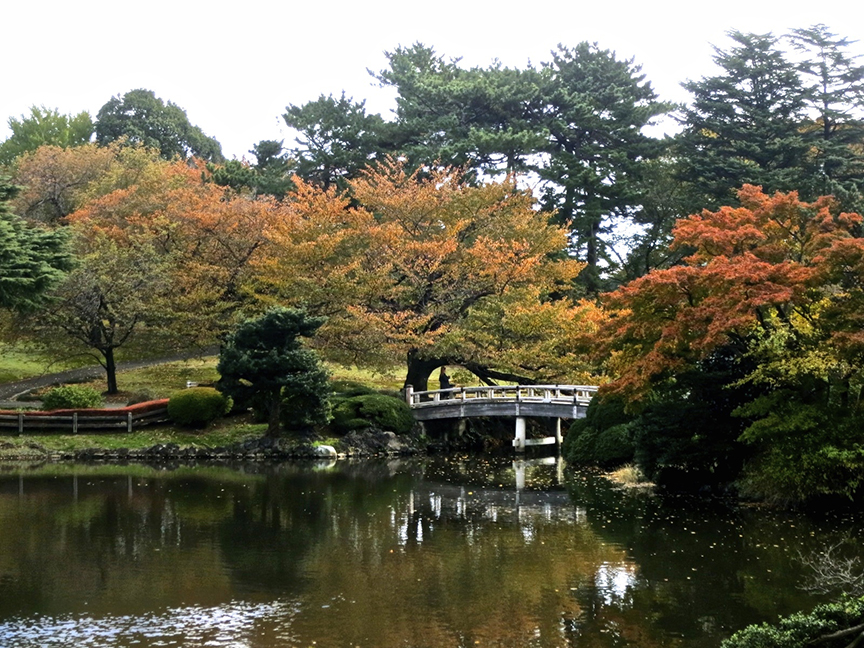 Shinjuku Gyou-en is most beautiful in early morning, when the pond reflects the changing Japanese maples and cherry trees.
