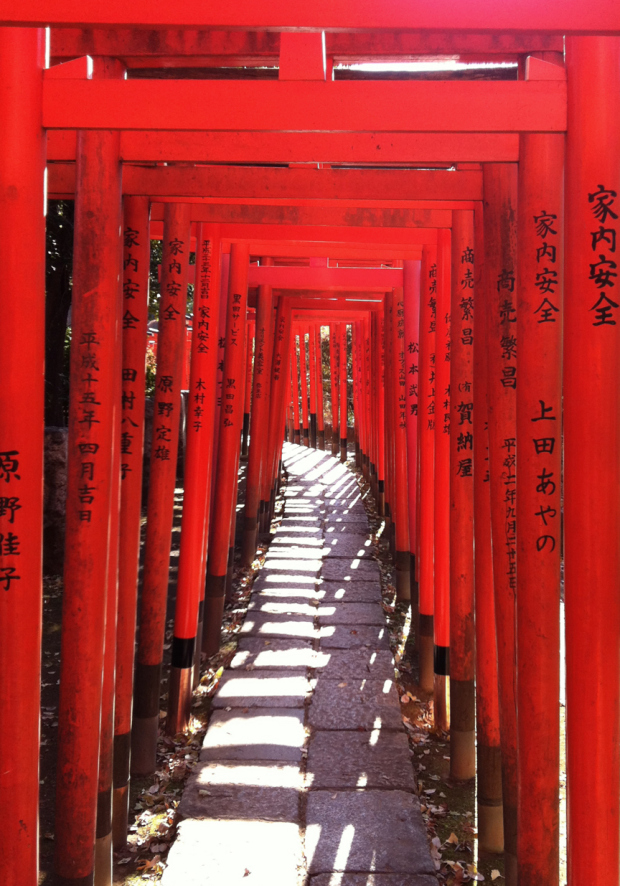 Bonus attraction: you can walk though a glowing tunnel of orange torii gates.