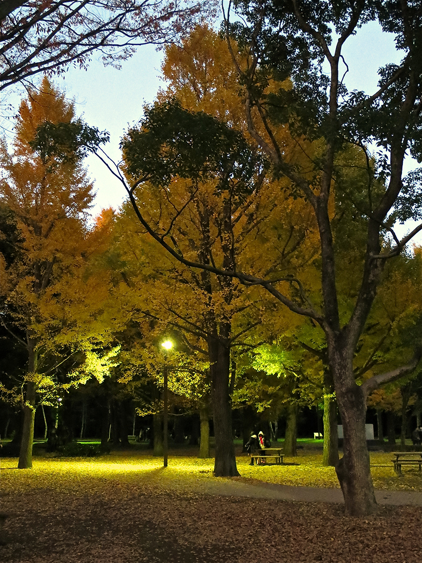 At twilight, you can scuff your feet through a sea of yellow leaves.