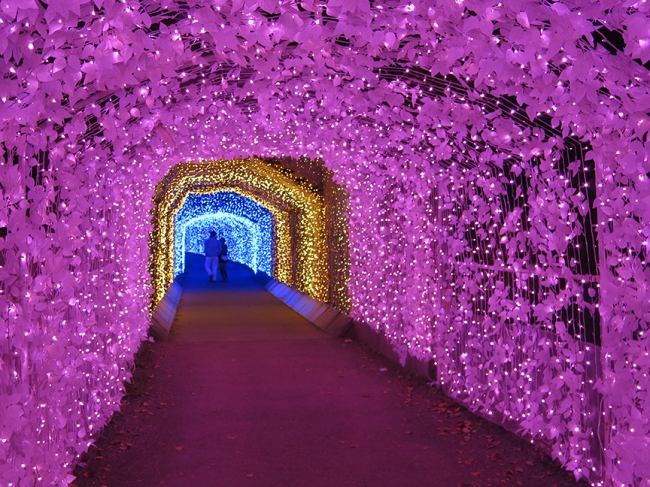 Enter this magical tunnel between the worlds...