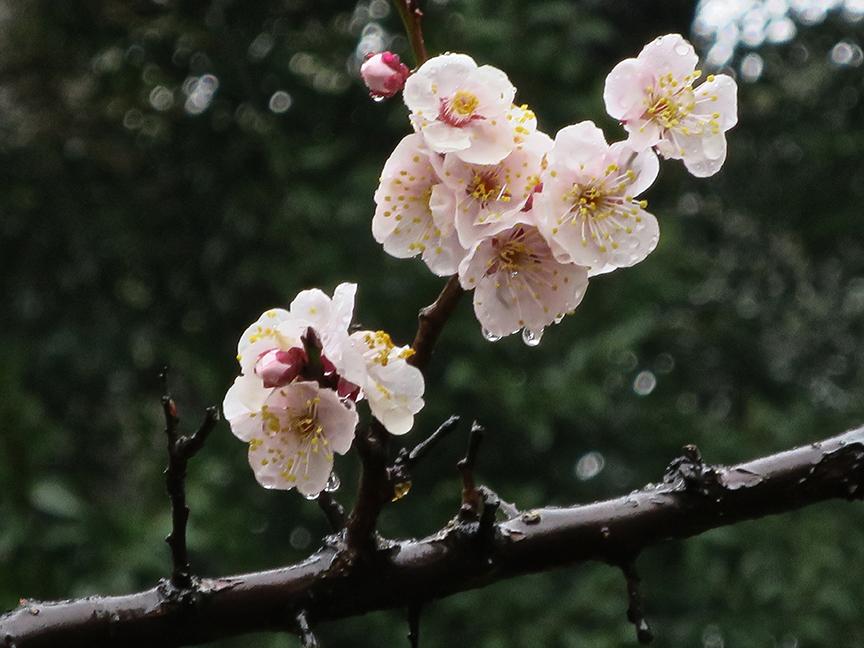 Arisugawa 2