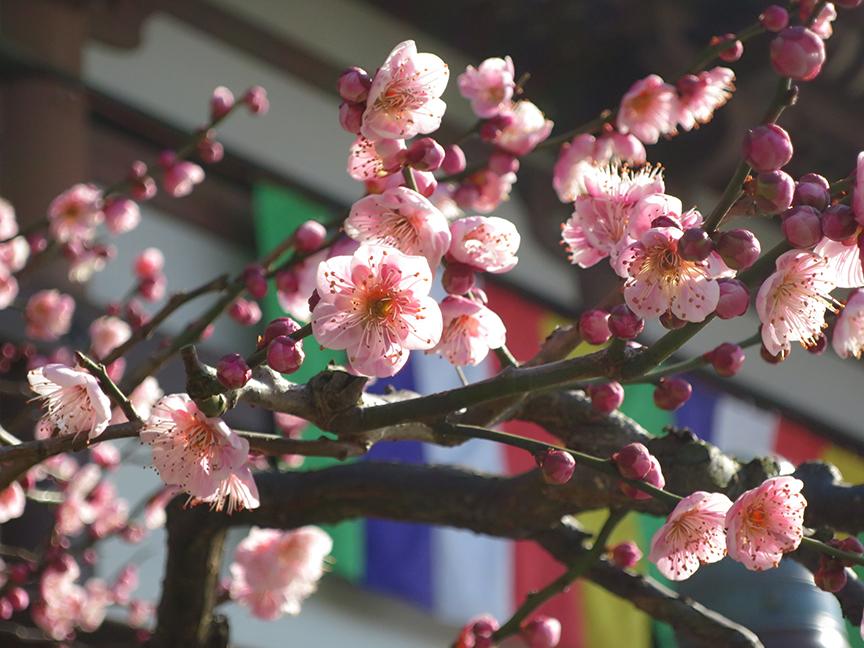 NishiaraiDaishi1