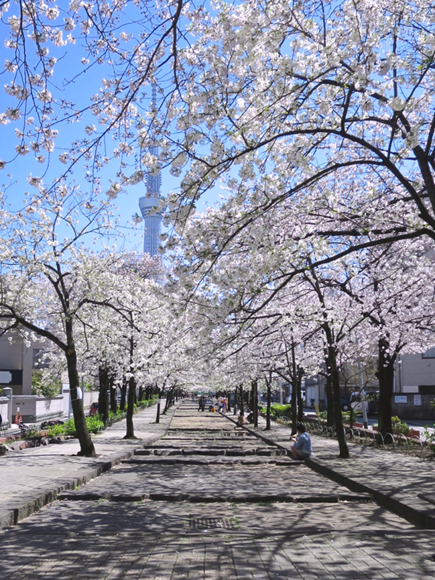 Look the other way (toward the river) and see Skytree framed by blooming cherry branches.
