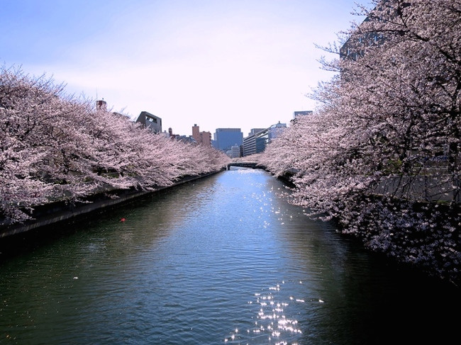 Cherry trees bloom like crazy along this little-known canal near Monzen-Nakacho Station. You can get amazing pictures from the bridges that criss-cross the water at easily-walkable intervals!