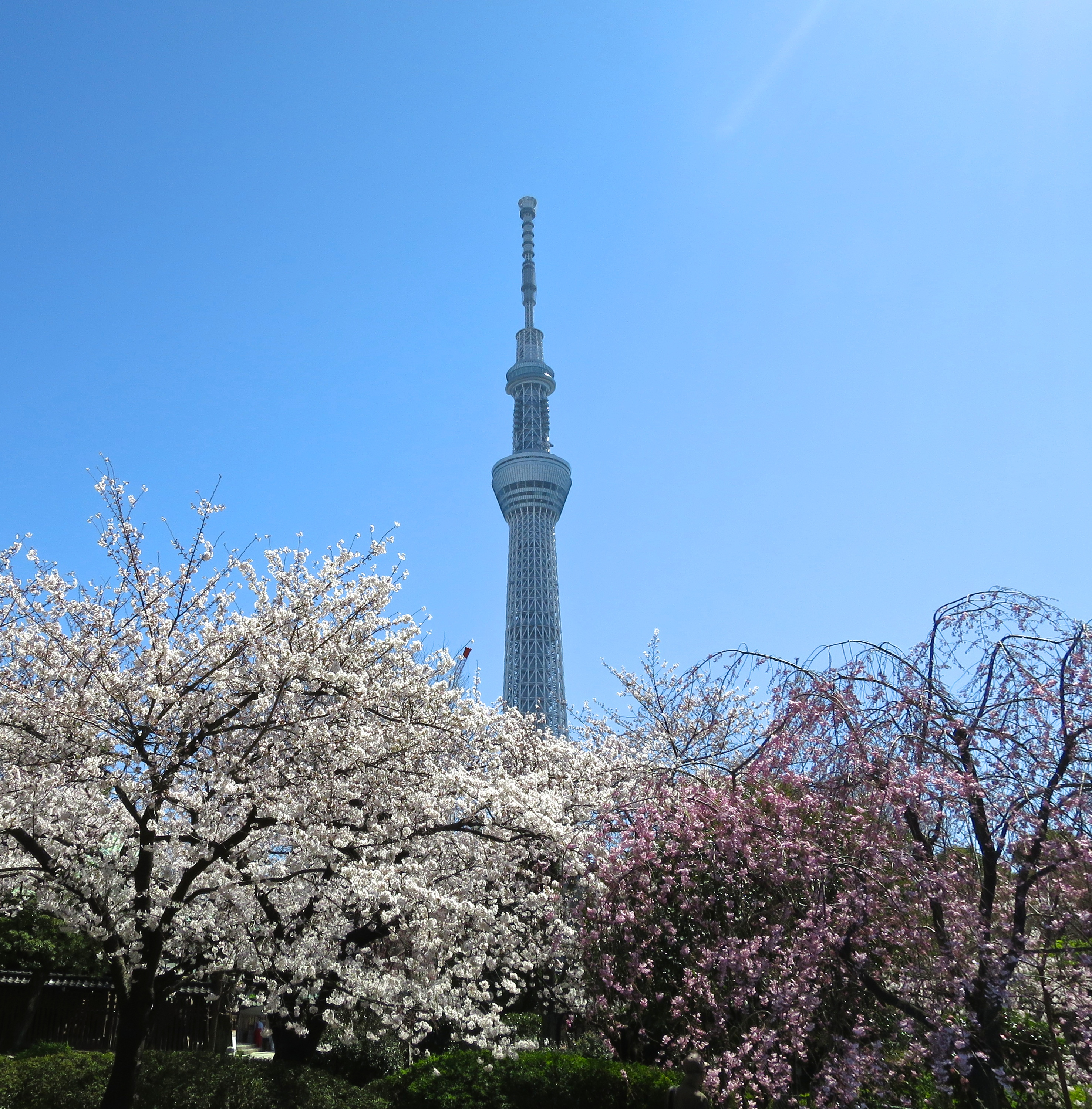 And, of course, if you want cherry blossom-encrusted shots of the big Skytree thing, this is the place to whip out your camera.