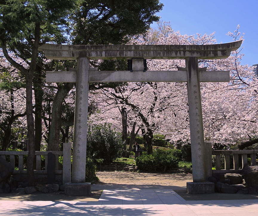 From inside the Mimeguri Shrine, the cherry-shaded walkways beckon.