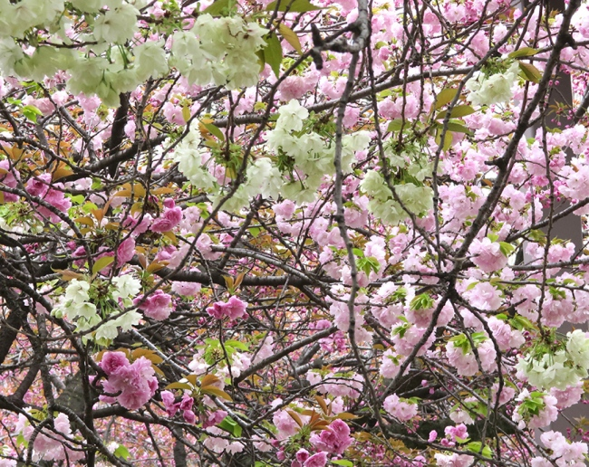 And they have an amazing variety of late-blooming trees.