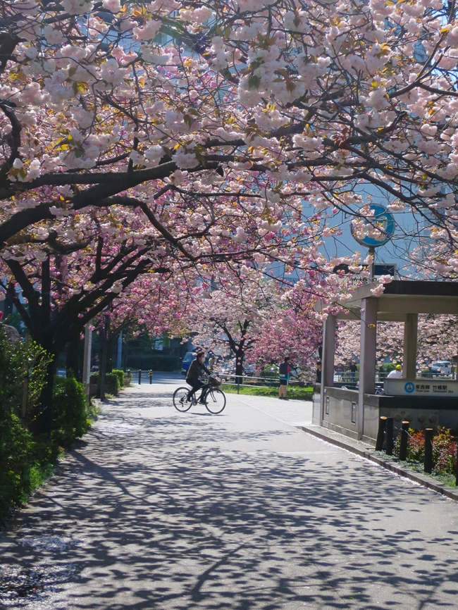 Outside Takebashi Station, a lovely cluster of late-blooming trees turns the walkway into a fairytale wonderland.
