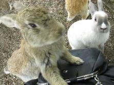 Bunny IslandFeat