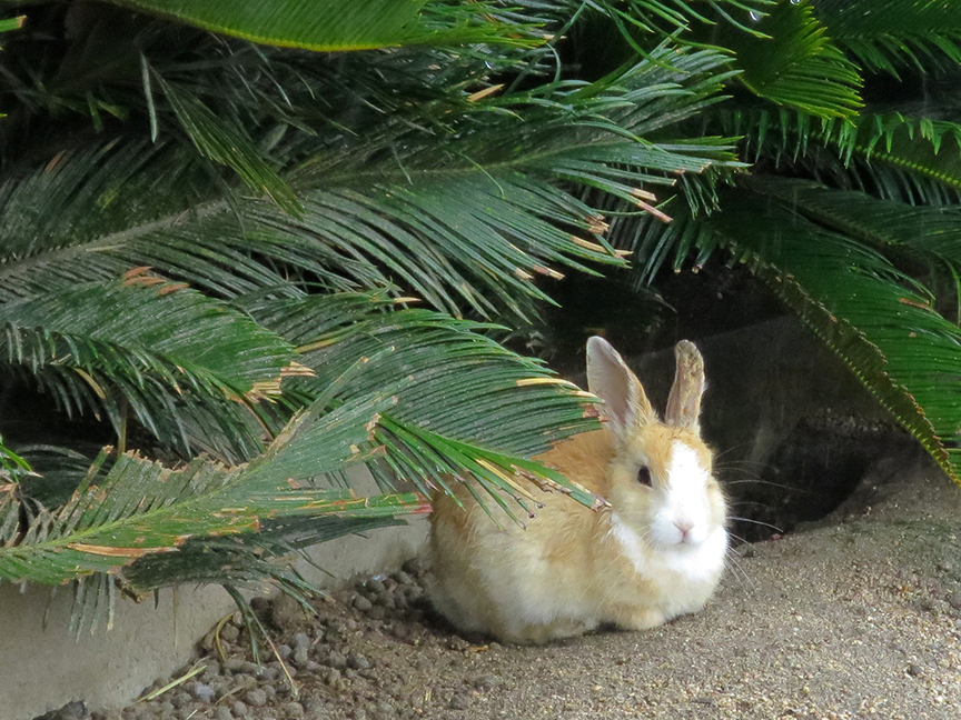 I was afraid wild bunnies might be sort of scruffy looking or reverting to jack-rabbity ranginess, but no! They were all super cute and fluffy.