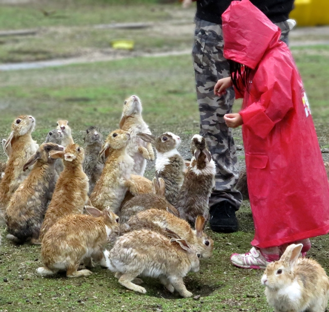 Wet, but undeterred, this small girl was the object of serious bunny devotion, on account of how tantalizingly low her snack bag was to the ground.