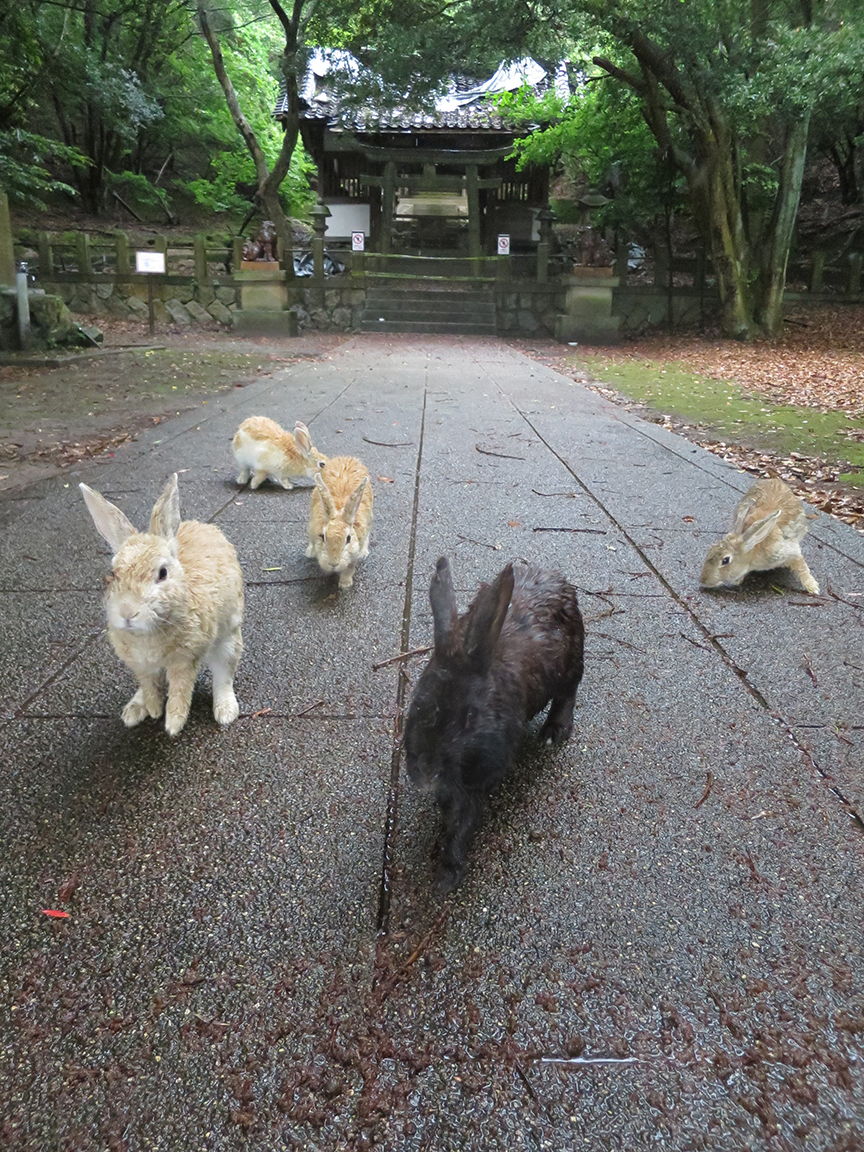 Of course we paid a visit to the island's shrine, even though these days it is attended only by rabbits.
