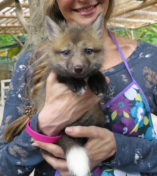 Before we left, we did the most only-in-Japan thing of all: hold a baby fox. It's ¥300 to have pix taken with the cutest of the cute, and the money goes to help care for and feed all the foxes at Zao Fox Village. (Foxlings are born in March and April, so if you're lucky enough to be there at that time of year, you can hold one too!)
