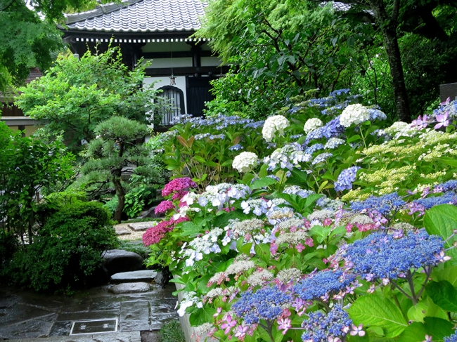 Every kind of hydrangea you can imagine greets the waiting crowds at the foot of Hasedera temple's ajisai mountain