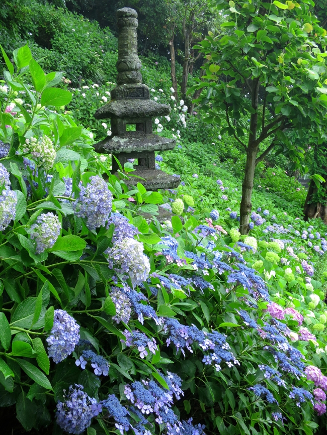 A waterfall of lace-caps engulfs a stone mini-pagoda