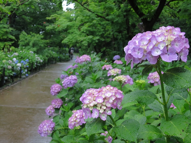 Shady flower-lined paths? Check!