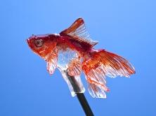 LolipopGoldfishFeat