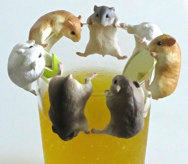 Hamsters1