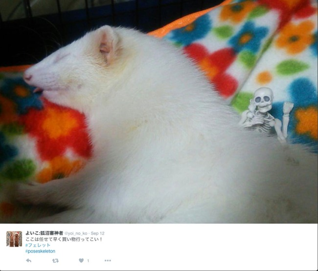 It even makes this albino ferret happy!