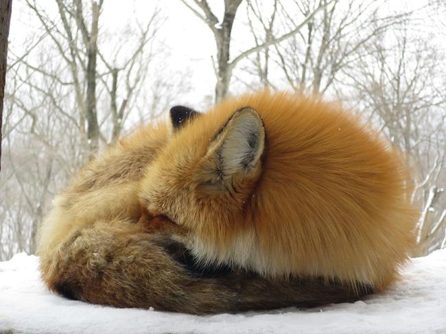 Fur pillows dotted the hillside